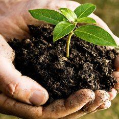 Organik Gübre ve Toprak Düzenleyiciler